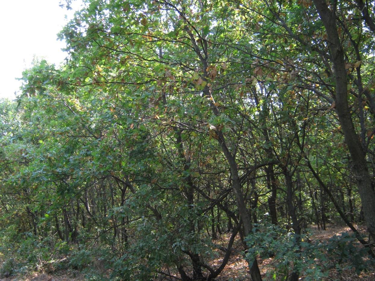 Местообитание 91М0 Балкано-панонски церово-горунови гори